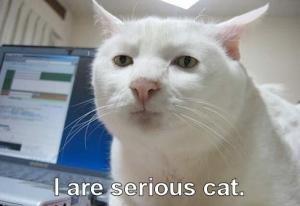 serious_cat
